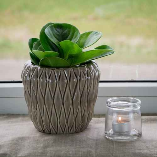 blument pfe g nstig online kaufen. Black Bedroom Furniture Sets. Home Design Ideas